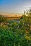 Θερινή αυγή Στοκ Εικόνες