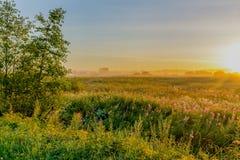 Θερινή αυγή Στοκ Φωτογραφία