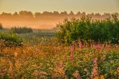 Θερινή αυγή Στοκ Φωτογραφίες