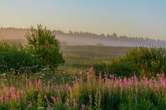 Θερινή αυγή Στοκ φωτογραφίες με δικαίωμα ελεύθερης χρήσης