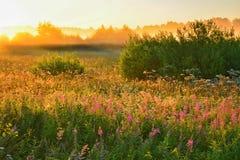 Θερινή αυγή Στοκ φωτογραφία με δικαίωμα ελεύθερης χρήσης