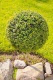 θερινή αυλή φυτών Στοκ Φωτογραφίες