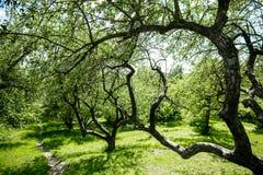 Θερινή αλέα του μήλου Στοκ εικόνες με δικαίωμα ελεύθερης χρήσης