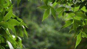 Θερινή βροχή στο δάσος απόθεμα βίντεο
