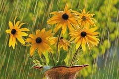 Θερινή βροχή Στοκ Εικόνα