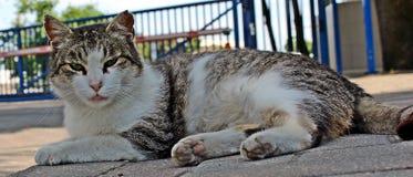 Θερινή γάτα Στοκ Εικόνα