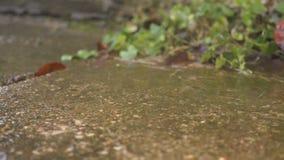 Θερινή ηλιόλουστη βροχή Πτώση πτώσεων από τη στέγη, σε αργή κίνηση φιλμ μικρού μήκους