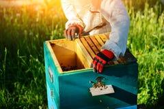 θερινή ηλιόλουστη εργασία δύο ημέρας beekeepers μελισσουργείων Καλοκαίρι στοκ εικόνες