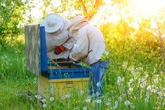 θερινή ηλιόλουστη εργασία δύο ημέρας beekeepers μελισσουργείων Καλοκαίρι στοκ φωτογραφίες με δικαίωμα ελεύθερης χρήσης