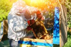 θερινή ηλιόλουστη εργασία δύο ημέρας beekeepers μελισσουργείων Καλοκαίρι στοκ φωτογραφία