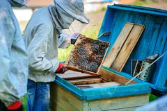 θερινή ηλιόλουστη εργασία δύο ημέρας beekeepers μελισσουργείων Καλοκαίρι στοκ φωτογραφία με δικαίωμα ελεύθερης χρήσης