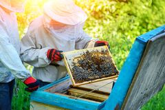θερινή ηλιόλουστη εργασία δύο ημέρας beekeepers μελισσουργείων Καλοκαίρι στοκ εικόνες με δικαίωμα ελεύθερης χρήσης
