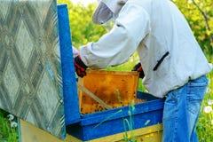 θερινή ηλιόλουστη εργασία δύο ημέρας beekeepers μελισσουργείων Καλοκαίρι στοκ εικόνα με δικαίωμα ελεύθερης χρήσης