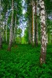 Θερινή ημέρα σε ένα όμορφο δάσος Στοκ εικόνα με δικαίωμα ελεύθερης χρήσης