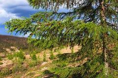 Θερινή ημέρα στο δάσος Στοκ Εικόνες