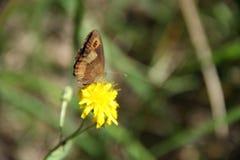 Θερινή ηρεμία με την πεταλούδα στοκ εικόνες με δικαίωμα ελεύθερης χρήσης