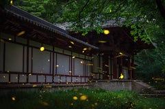 Θερινή νεράιδα - Fireflies στοκ φωτογραφίες