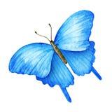 Θερινή πεταλούδα η διακοσμητική εικόνα απεικόνισης πετάγματος ραμφών το κομμάτι εγγράφου της καταπίνει το watercolor Στοκ εικόνες με δικαίωμα ελεύθερης χρήσης