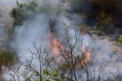 Θερινή πυρκαγιά, νότια Ιταλία Στοκ Εικόνα