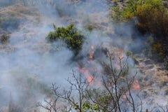 Θερινή πυρκαγιά, νότια Ιταλία Στοκ Φωτογραφία