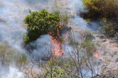 Θερινή πυρκαγιά, νότια Ιταλία Στοκ εικόνα με δικαίωμα ελεύθερης χρήσης