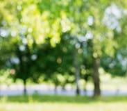 Θερινή σημύδα από την εστίαση Στοκ Εικόνες