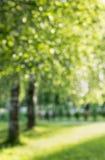 Θερινή σημύδα από την εστίαση Στοκ εικόνες με δικαίωμα ελεύθερης χρήσης