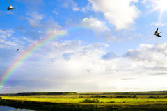 Θερινή σκηνή τέχνης, πανόραμα της φύσης μετά από τη βροχή Στοκ Εικόνες