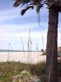 Θερινή χλόη από την παραλία Στοκ φωτογραφία με δικαίωμα ελεύθερης χρήσης