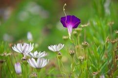 Θερινή χλόη και μακρο λουλούδι Στοκ φωτογραφίες με δικαίωμα ελεύθερης χρήσης
