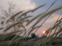 Θερινή όμορφη χλόη στοκ φωτογραφίες