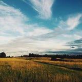 θερινή όψη χλόης πεδίων γωνίας ευρέως Στοκ φωτογραφία με δικαίωμα ελεύθερης χρήσης