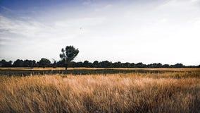 θερινή όψη χλόης πεδίων γωνίας ευρέως Στοκ Εικόνες
