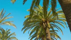 Θερινοί φοίνικες, Ισπανία απόθεμα βίντεο