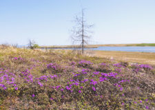 ΘΕΡΙΝΟ τοπίο Στοκ εικόνα με δικαίωμα ελεύθερης χρήσης