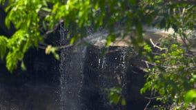 Θερινός δασικός και δύσκολος ποταμός που ρέει στον καταρράκτη βουνών Πράσινα φύλλα στο τροπικό δάσος και πετρώδης καταρράκτης στο φιλμ μικρού μήκους