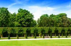 Θερινός κήπος με τους όμορφους φράκτες και τους πράσινους χορτοτάπητες στοκ εικόνα με δικαίωμα ελεύθερης χρήσης