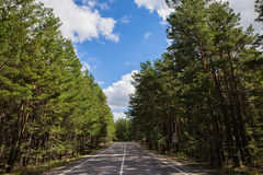 Θερινός κενός δρόμος που περνά από pinery στο εθνικό πάρκο φύσης Burabai, Καζακστάν Στοκ φωτογραφία με δικαίωμα ελεύθερης χρήσης