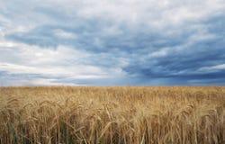 Θερινός τομέας και δραματικός ουρανός πριν από τη θύελλα Στοκ εικόνες με δικαίωμα ελεύθερης χρήσης