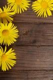 Θερινός τομέας με τις μαργαρίτες και cornflower Στοκ εικόνες με δικαίωμα ελεύθερης χρήσης