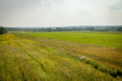 Θερινός τομέας, περιοχή Kaluga, της Ρωσίας Στοκ φωτογραφία με δικαίωμα ελεύθερης χρήσης