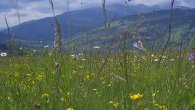 Θερινός τομέας Carpathians στο βουνό απόθεμα βίντεο