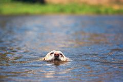 Θερινός χρόνος με το σκυλί Στοκ φωτογραφία με δικαίωμα ελεύθερης χρήσης