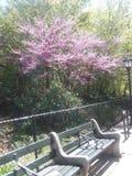 Θερινός χρόνος να καθίσουν τα μυρίζοντας όμορφα λουλούδια στοκ εικόνες
