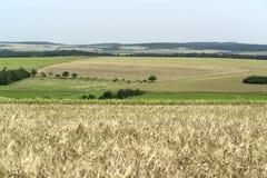 θερινός χρόνος τοπίου γεωργίας εικονογραφικός αγροτικός στοκ φωτογραφίες με δικαίωμα ελεύθερης χρήσης