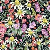 Θερινό άνευ ραφής σχέδιο Watercolor με Chamomile, μούρα, Wildflowers, το Blackberry και τις πεταλούδες ελεύθερη απεικόνιση δικαιώματος