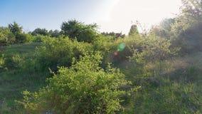 Θερινό δάσος με τις ακτίνες ήλιων Στοκ φωτογραφία με δικαίωμα ελεύθερης χρήσης