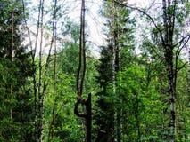 Θερινό δάσος σε Ural, μέση Ρωσία Στοκ Φωτογραφία