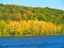 Θερινό δάσος στην όχθη ποταμού Στοκ εικόνες με δικαίωμα ελεύθερης χρήσης