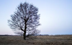 θερινό δέντρο εποχής πεδίων επαρχίας στοκ εικόνες με δικαίωμα ελεύθερης χρήσης
